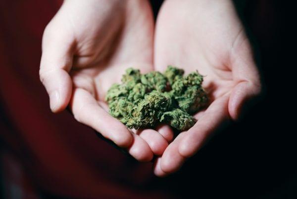 33-årig mand sigtet for at hjemmedyrke marihuana