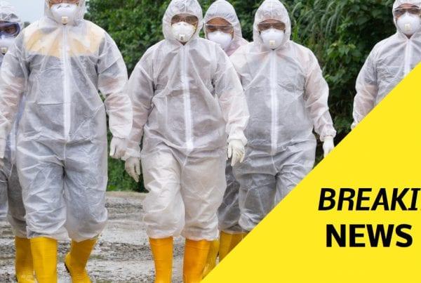 Fugleinfluenza i Danmark: 25.000 fugle skal aflives