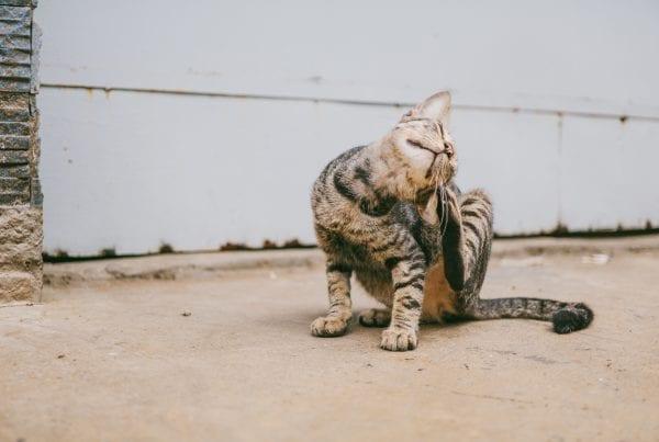 BREAKING: Katte bliver også aflivet på minkfarme