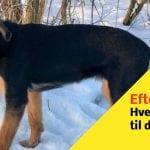 Hund fundet efterladt - Hvem savner denne hund?