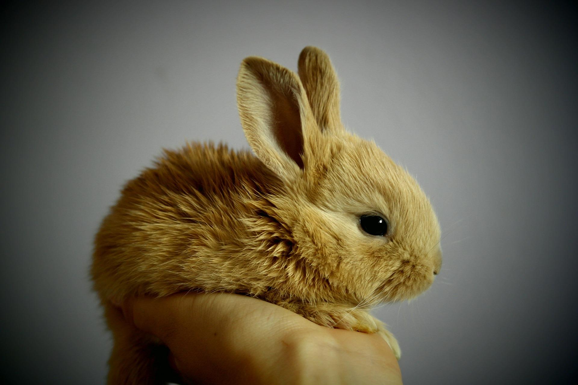 Der er ikke nogen kaniner, som kan klare sig ude på fri pote i den danske natur. De vil enten dø af sygdomme, af sult eller blive taget af ræven, så tag ansvar for den kanin, som I har anskaffet jer, og som i måske ikke kan have længere,